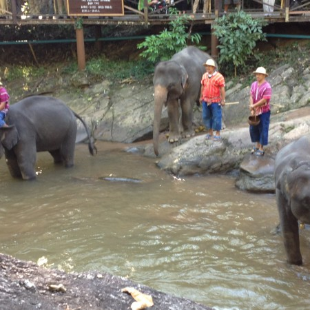 Elephants of Chiang Mai, Thailand