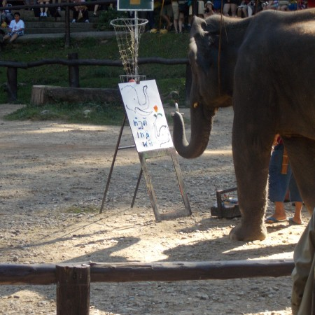 Elephant actually painting